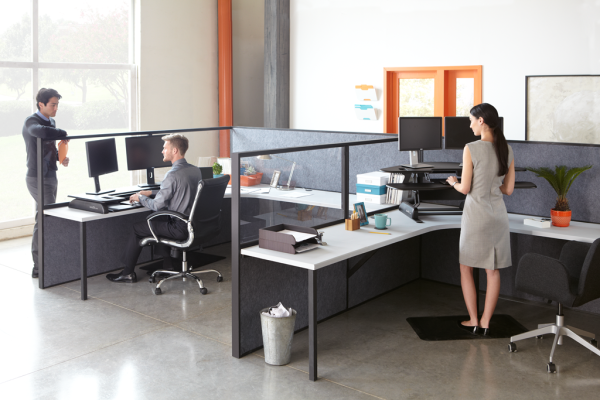 People in an office using seated and standing desks