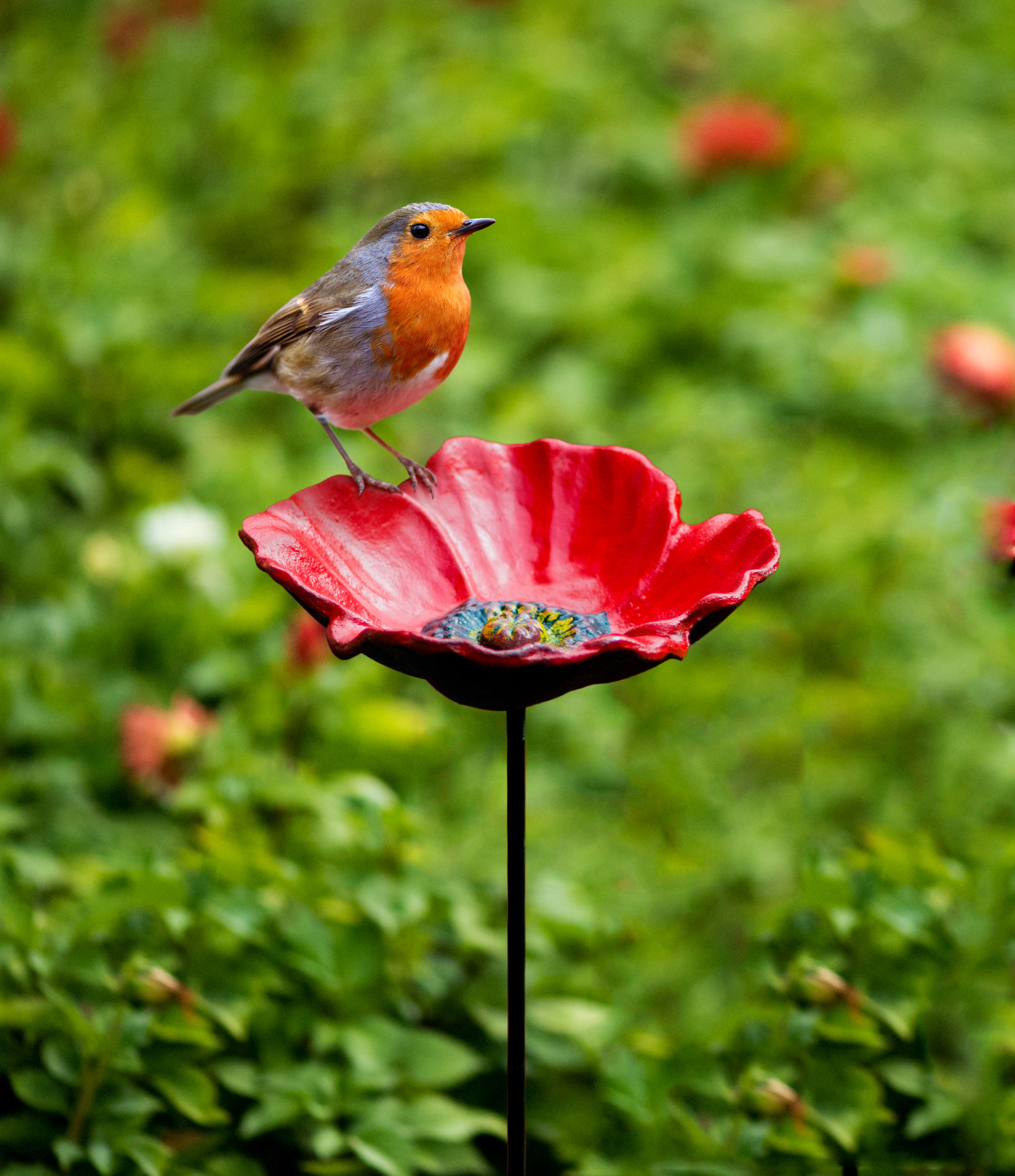 poppy-feeder-with-robin